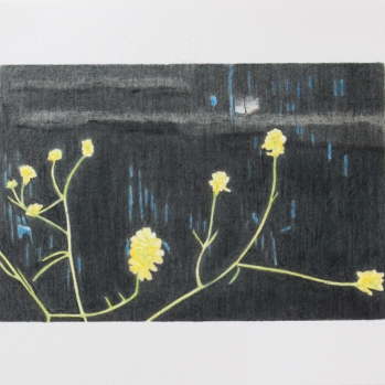 'yellow flowers, Woolwich' 2020: coloured pencil; 20cm x 15cm