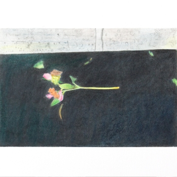 'dead flowers, West Drayton' 2020: coloured pencil; 20cm x 15cm
